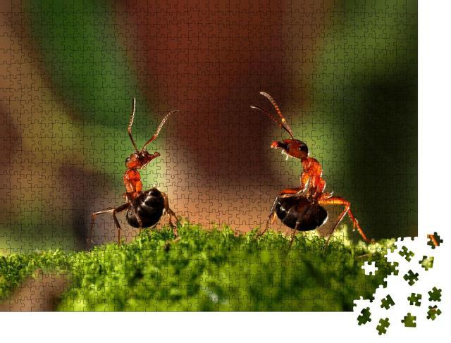 """Puzzle 1000 Teile """"Kampf von zwei Ameisen"""""""