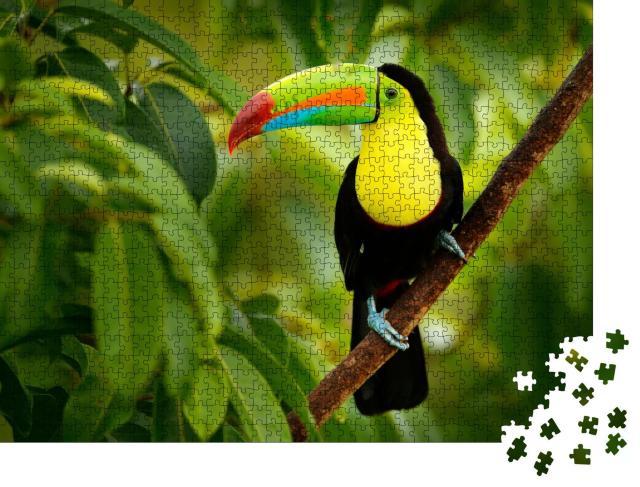 """Puzzle 1000 Teile """"Tukan auf Costa Rica"""""""