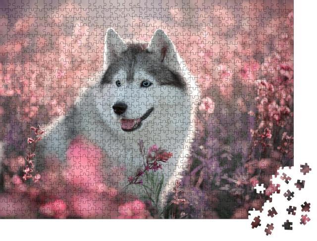 """Puzzle 1000 Teile """"Wundeschöner Husky auf einem blühenden Feld"""""""
