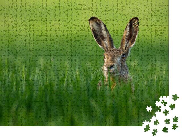 """Puzzle 1000 Teile """"Wilder Feldhase im grünen Gras"""""""