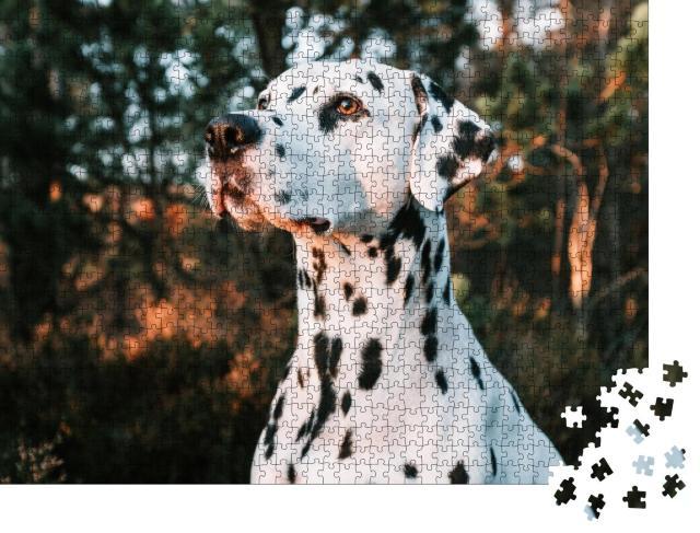 """Puzzle 1000 Teile """"Portrait: Dalmatiner, schöne Landschaft und Sonnenuntergang"""""""