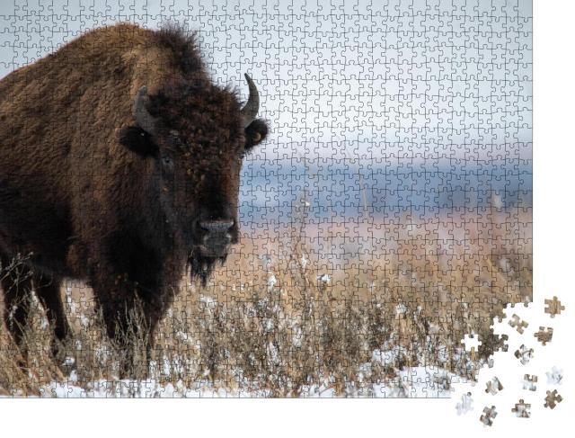 """Puzzle 1000 Teile """"Oklahoma Bison nach Schneefällen im Dezember"""""""