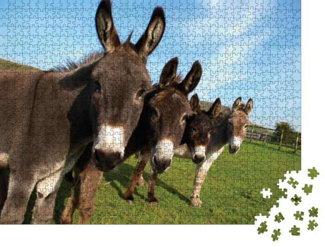 """Puzzle 1000 Teile """"Gruppe von Eseln auf einem Feld"""""""