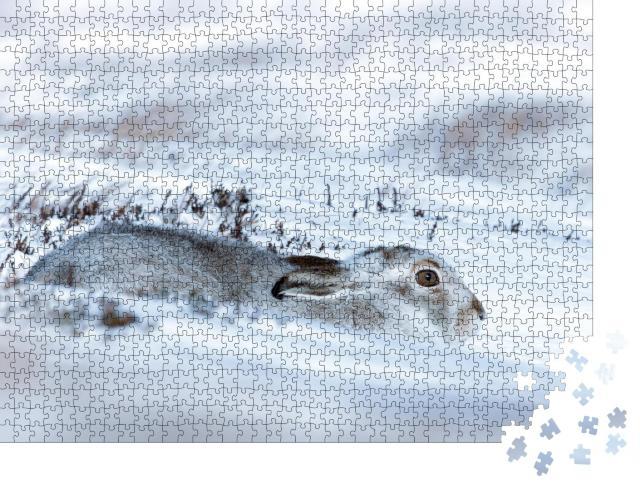 """Puzzle 1000 Teile """"Ein im Schnee liegender Schneehase"""""""