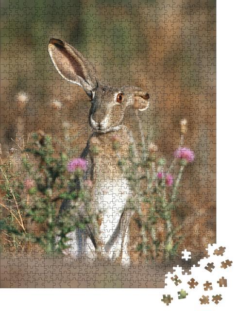 """Puzzle 1000 Teile """"Schwarzschwanz-Kaninchen mit langen Ohren, Texas, USA"""""""