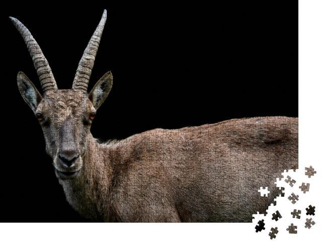 """Puzzle 1000 Teile """"Nahaufnahme eines weiblichen Alpensteinbocks, Capra ibex"""""""