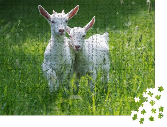 """Puzzle 1000 Teile """"Zwei Ziegenbabys stehen im hohen Sommergras"""""""