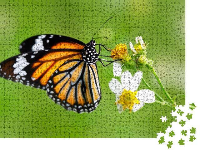 """Puzzle 1000 Teile """"Nahaufnahme: Schmetterling der Gattung Gewöhnlicher Tigerfalter auf einer Blüte"""""""