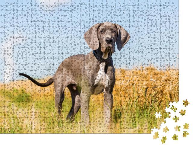 """Puzzle 1000 Teile """"Porträtbild eines Doggenwelpen, der auf einem Feldweg steht"""""""