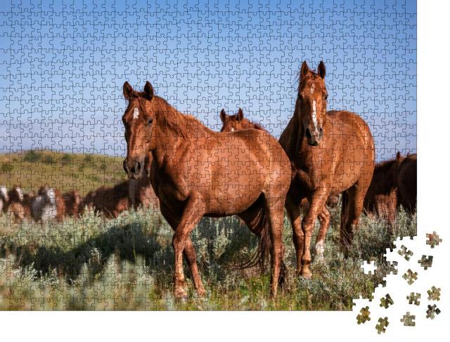 """Puzzle 1000 Teile """"Wunderschöne Herde amerikanischer Quarter Horse Ranch Pferde, Montana"""""""