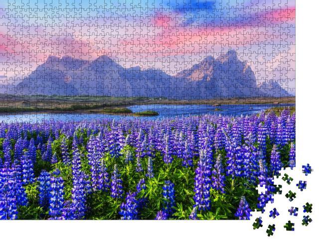 """Puzzle 1000 Teile """"Lupinen-Wiesen in der Nähe des Stokksnes-Gebirges, Island"""""""