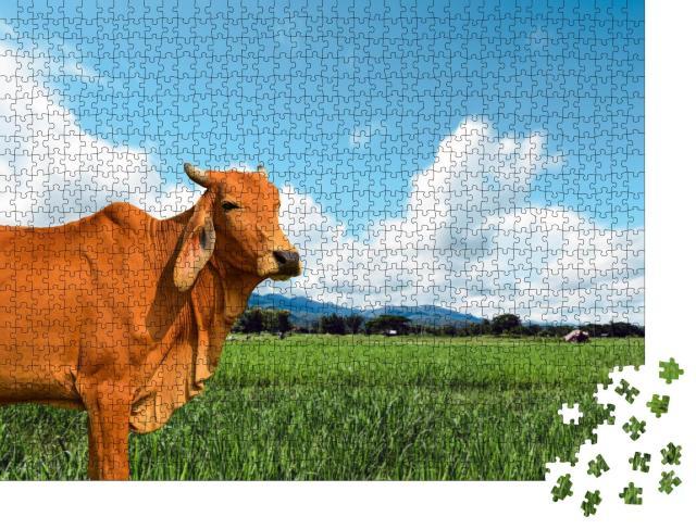 """Puzzle 1000 Teile """"Kuh auf einer saftig-grünen Weide"""""""