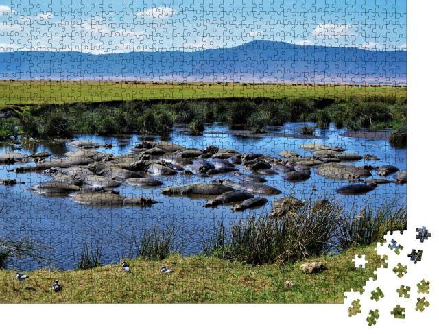 """Puzzle 1000 Teile """"Nilpferdbecken, Ngorongoro-Krater, Tansania"""""""