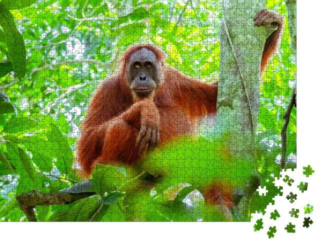 """Puzzle 1000 Teile """"Weiblicher Orang-Utan, der auf einem Baumstamm sitzt, Indonesien"""""""