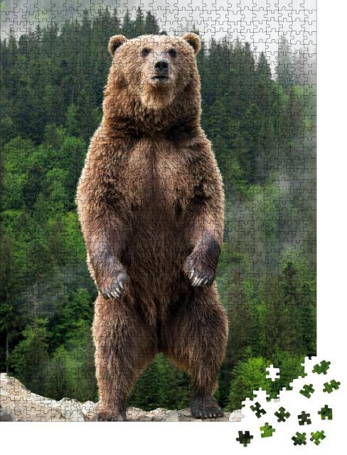 """Puzzle 1000 Teile """"Beeindruckend: Braunbär auf den Hinterpfoten"""""""