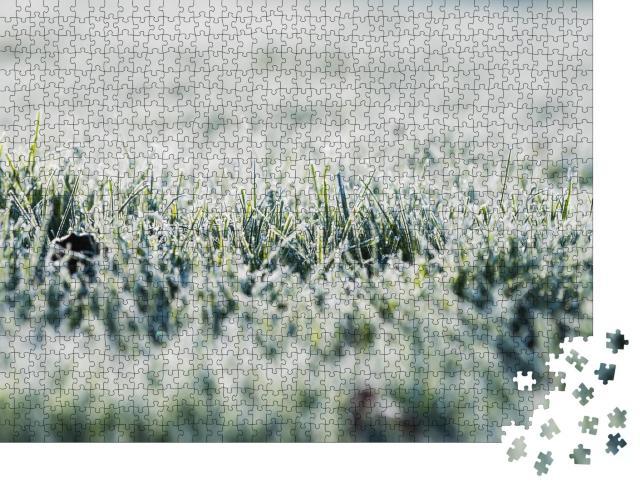 """Puzzle 1000 Teile """"Frost auf dem Gras in der kalten Jahreszeit"""""""