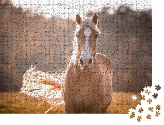 """Puzzle 1000 Teile """"Haflinger-Pferd mit weißer Blesse"""""""
