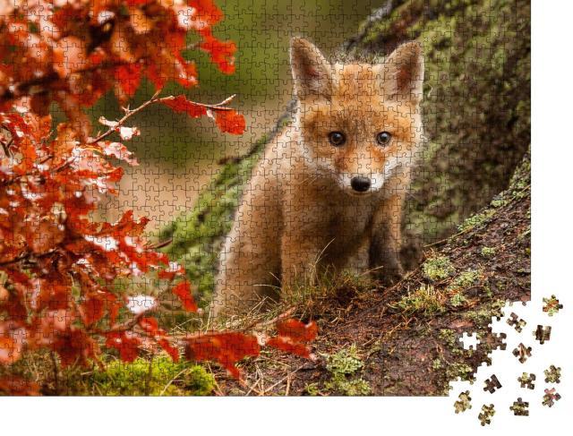"""Puzzle 1000 Teile """"Neugieriges Fuchsjunges"""""""