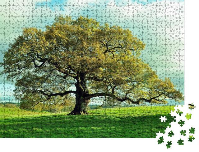 """Puzzle 1000 Teile """"Alte Eiche auf einer englischen Wiese"""""""
