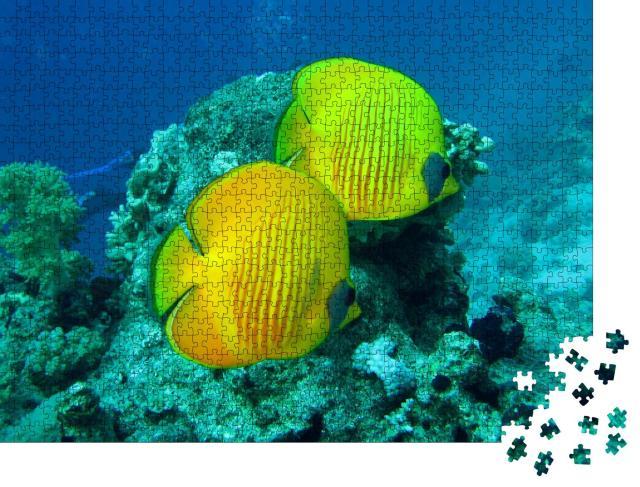 """Puzzle 1000 Teile """"Schönes und vielfältiges Korallenriff mit Fischen des Roten Meeres in Ägypten"""""""