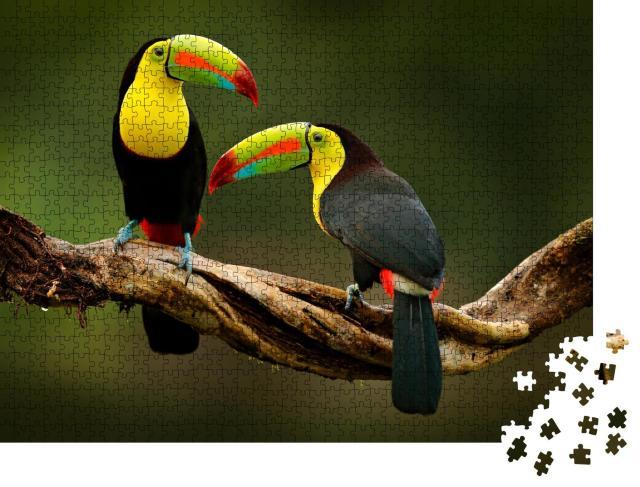"""Puzzle 1000 Teile """"Tukan sitzt auf einem Ast im Wald, prächtige Vegetation von Costa Rica"""""""