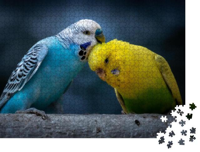 """Puzzle 1000 Teile """"Porträt eines blauen Wellensittichs und eines gelbgrünen Wellensittichs auf einem Ast"""""""