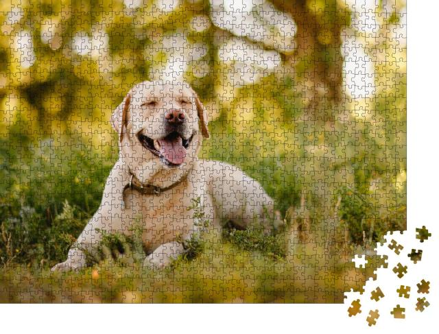 """Puzzle 1000 Teile """"Goldener Labrador Retriever bei einer Pause im Park"""""""