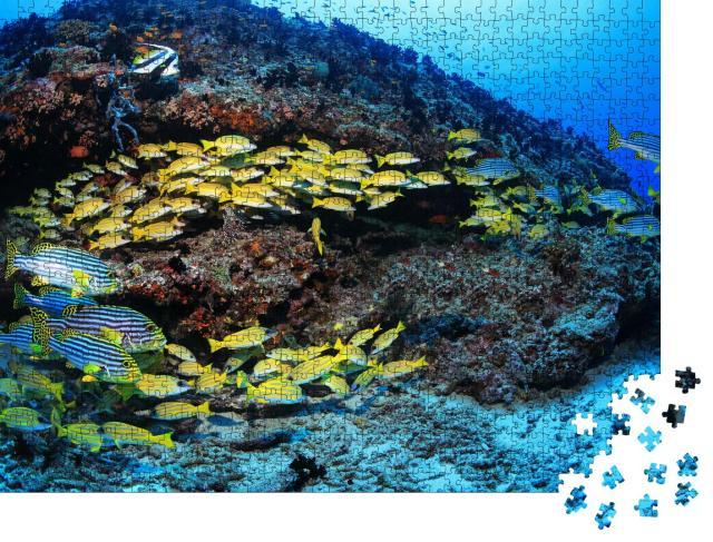 """Puzzle 1000 Teile """"Schönes tropisches Korallenriff mit bunten Fischen im Indischen Ozean"""""""