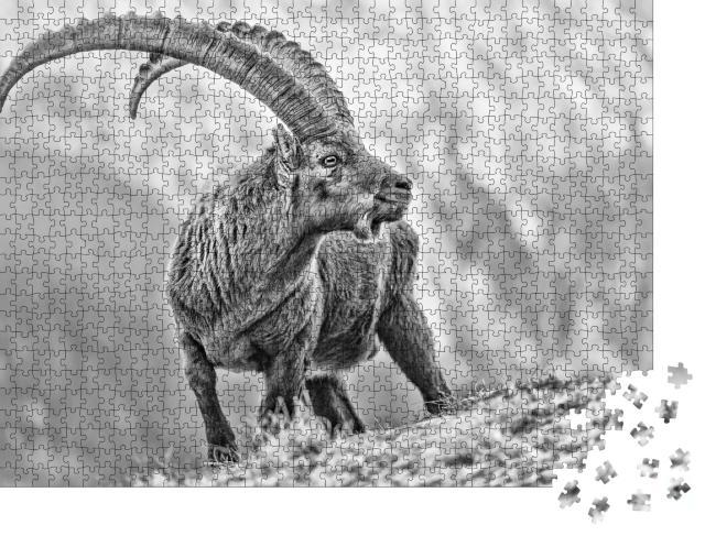 """Puzzle 1000 Teile """"Beeindruckendes Schwarz-Weiß-Porträt des Alpensteinbocks, Capra ibex"""""""