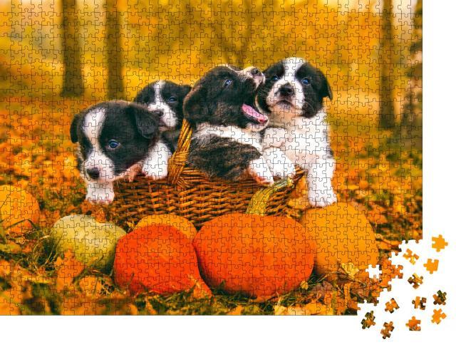 """Puzzle 1000 Teile """"Welsh Corgi Pembroke: Welpen posieren im Korb mit Kürbissen im Herbst"""""""