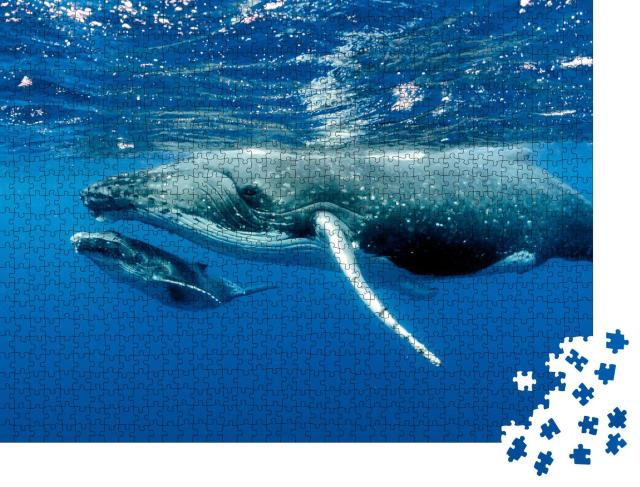 """Puzzle 1000 Teile """"Zwei Buckelwale unter der Wasseroberfläche im Pazifischer Ozean"""""""
