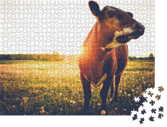 """Puzzle 1000 Teile """"Glückliche einzelne Kuh auf einer Wiese bei Sonnenuntergang"""""""