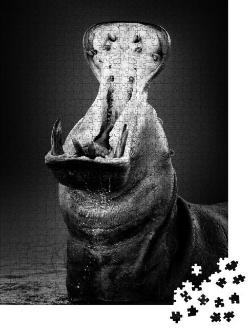 """Puzzle 1000 Teile """"Nilpferd mit weit geöffnetem Maul im Wasser, schwarz-weiß"""""""