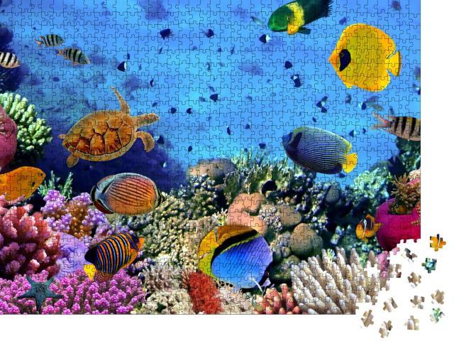 """Puzzle 1000 Teile """"Bunte Unterwasserwelt: Korallenkolonie im Roten Meer, Ägypten"""""""
