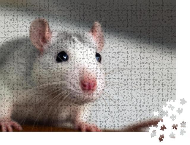 """Puzzle 1000 Teile """"Nahaufnahme einer lustigen weißen Hausratte"""""""