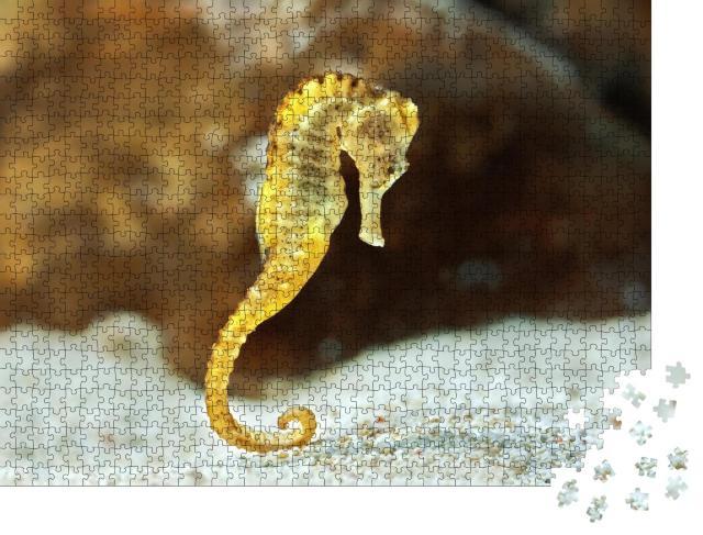 """Puzzle 1000 Teile """"Exemplar des langrüsseligen Hippocampus, auch bekannt als Seepferdchen"""""""