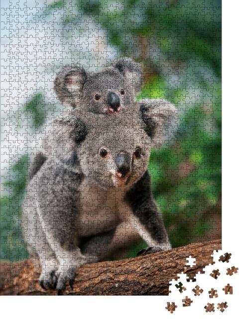 """Puzzle 1000 Teile """"Koala-Weibchen mit Jungtier auf dem Rücken"""""""
