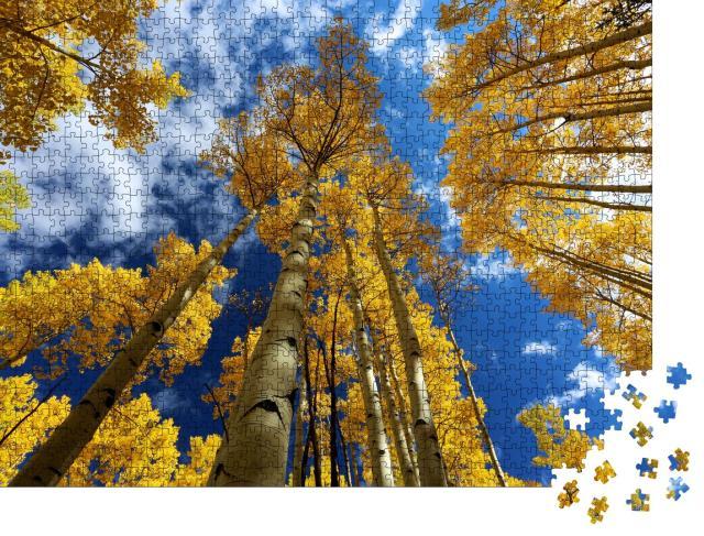 """Puzzle 1000 Teile """"Herbst Baldachin von leuchtend gelben Aspen: Rocky Mountains, Colorado"""""""