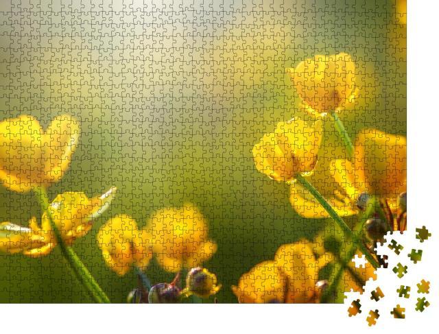 """Puzzle 1000 Teile """"Feld mit Frühlingsblumen im Sonnenlicht"""""""