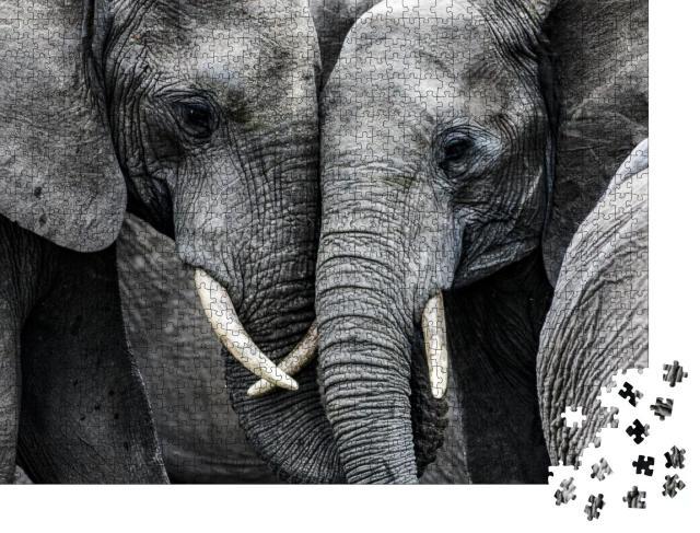 """Puzzle 1000 Teile """"Elefanten"""""""
