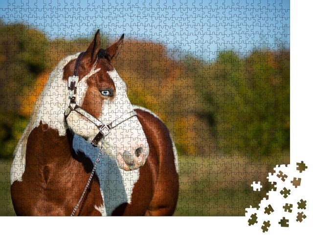 """Puzzle 1000 Teile """"Junges Paint Horse mit blauen Augen posiert in der Herbstlandschaft"""""""