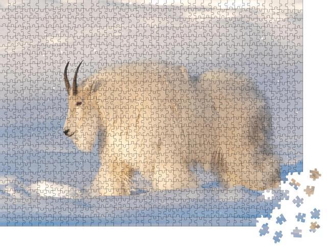 """Puzzle 1000 Teile """"Eine weiße, haarige Bergziege im Norden Kanadas, verschneiter Hintergrund"""""""
