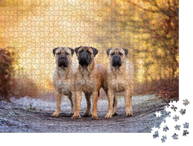 """Puzzle 1000 Teile """"Drei Bullenmastiffs an einem frostigen Morgen"""""""