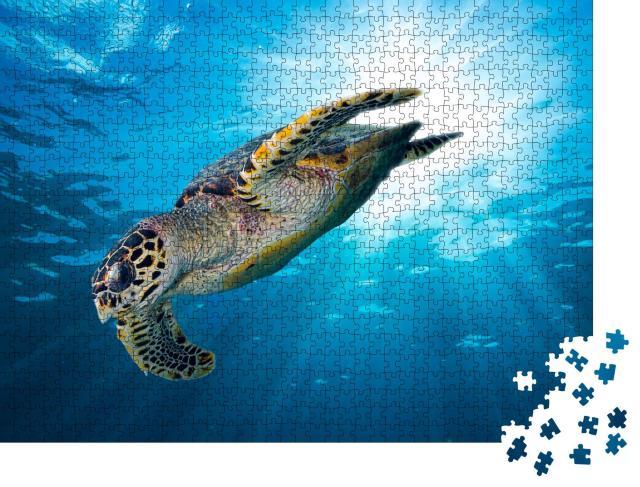 """Puzzle 1000 Teile """"Falkenschnabel Meeresschildkröte im tiefblauen Ozean"""""""