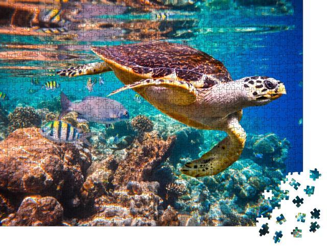"""Puzzle 1000 Teile """"Echte Karettschildkröte im Korallenriff"""""""