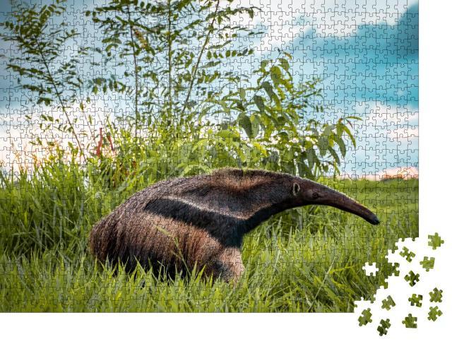 """Puzzle 1000 Teile """"Schöner Flaggenameisenbär auf einer Bonito-Farm in Brasilien"""""""