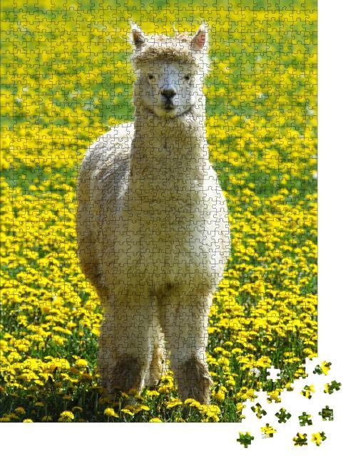 """Puzzle 1000 Teile """"Alpaka auf einer Sommerwiese mit gelben Blumen"""""""