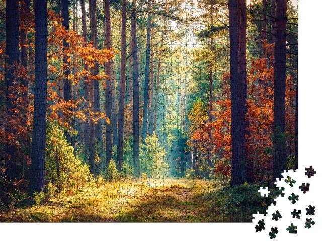 """Puzzle 1000 Teile """"Sonniger Herbstwald"""""""