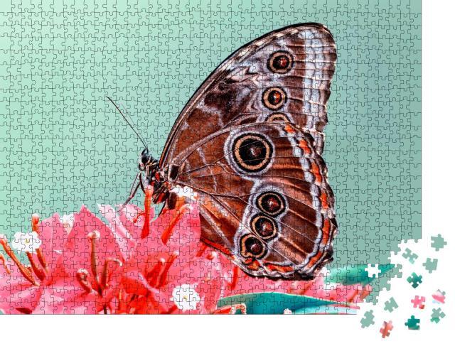 """Puzzle 1000 Teile """"Makroaufnahme: Ein Schmetterling"""""""