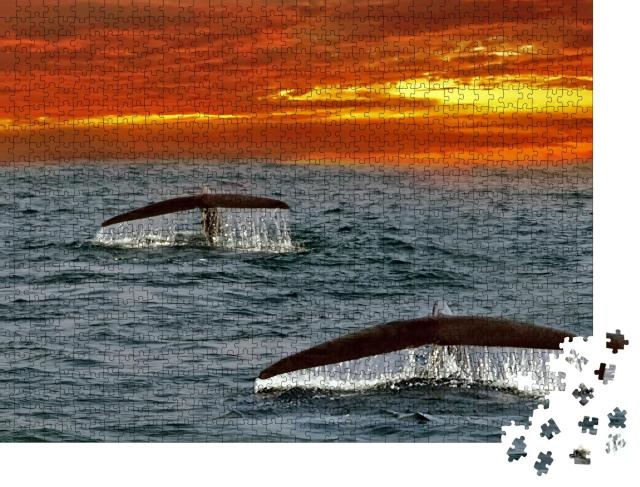 """Puzzle 1000 Teile """"Flossen von Blauwalen im Indischen Ozean, Sri Lanka"""""""